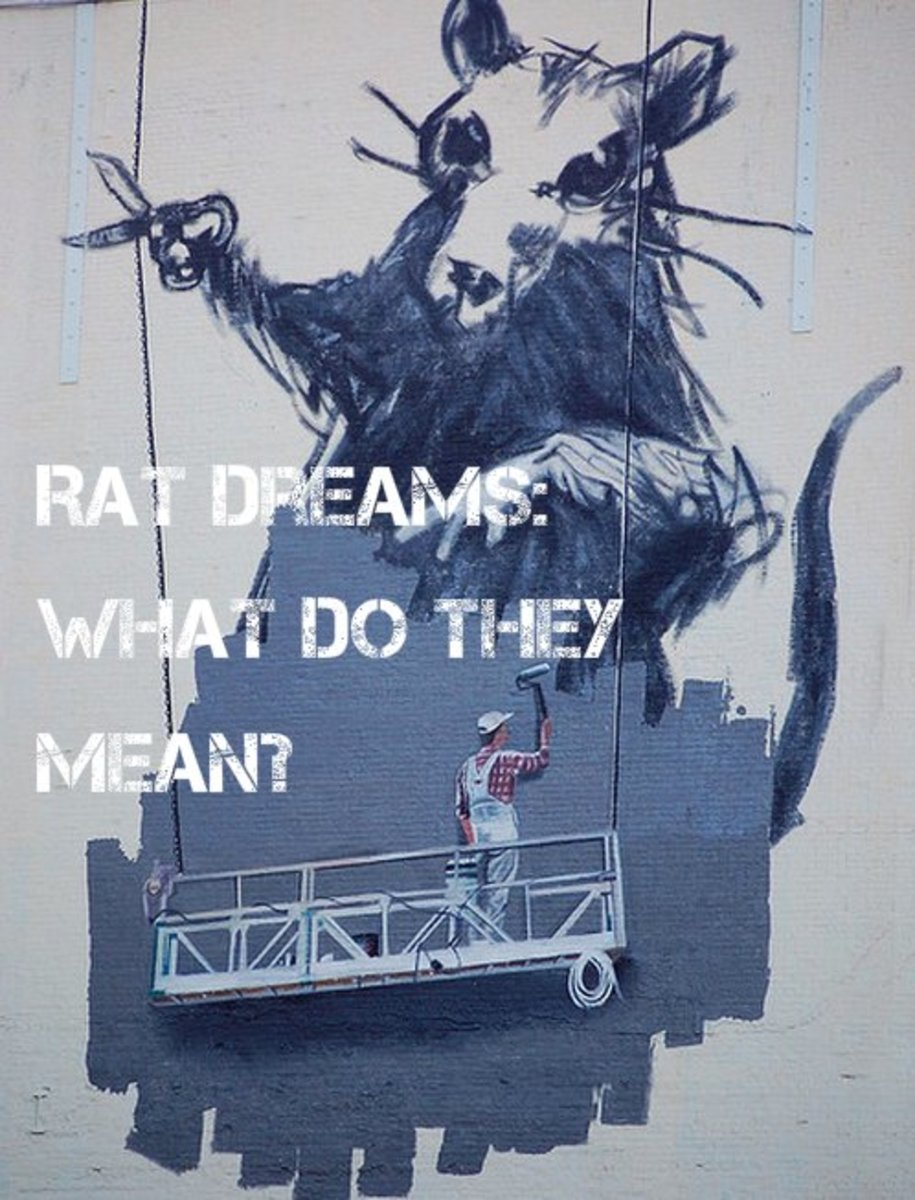 Rat Dream Meanings and Interpretations
