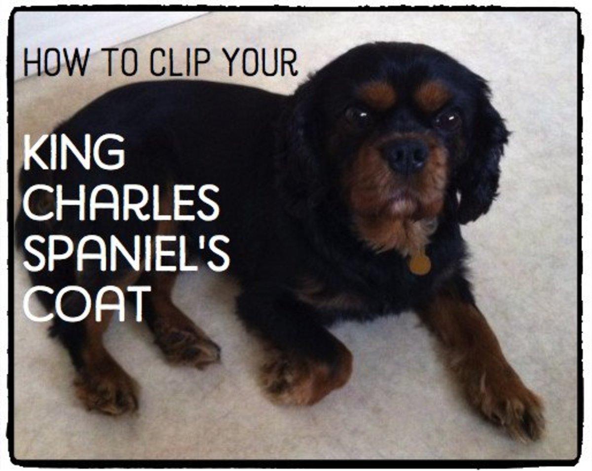 Dog Grooming Pethelpful