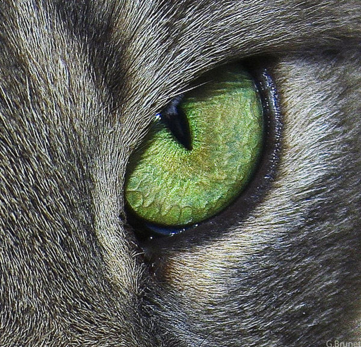 25 Killer Cat Names for Female Cats
