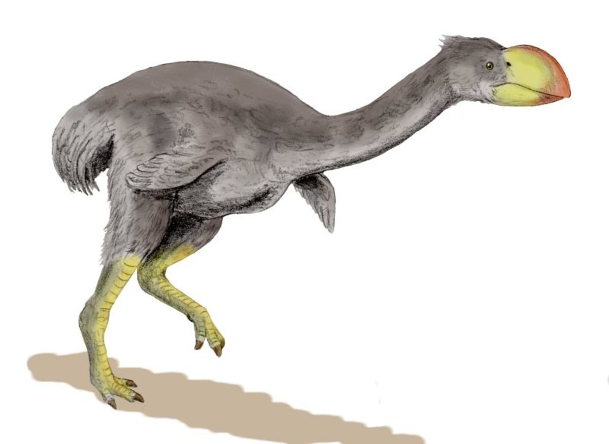 Dromornis planei, the Demon Duck of Doom, was one of seven giant prehistoric Australian birds. The largest stood ten feet tall.