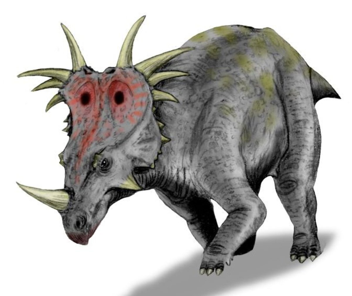 This is Styracosaurus, a ceratopsian dinosaur that matches the description of Ngoubou.