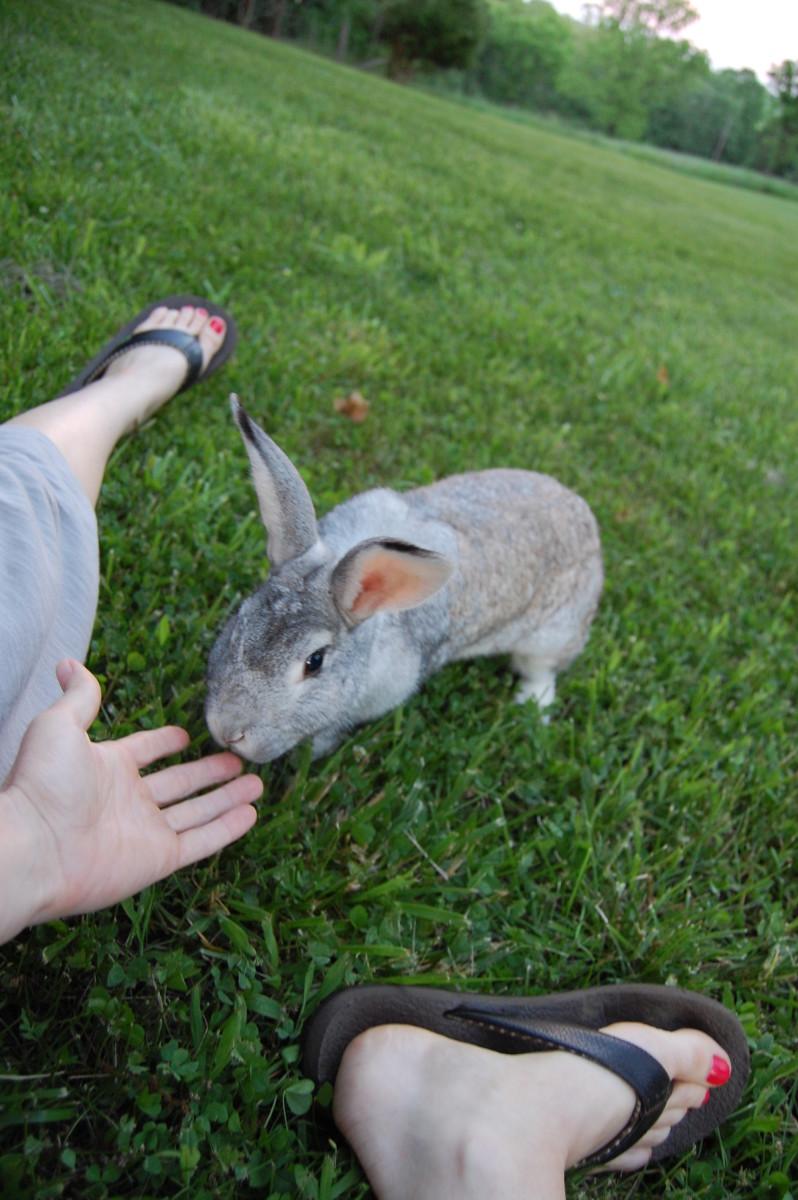 Free Range Bunnies: A Story of Rabbit Emancipation