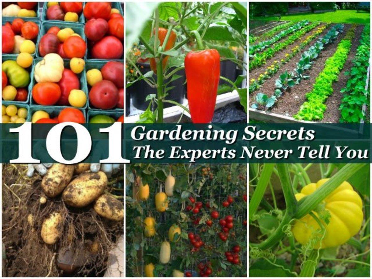 101 Gardening Secrets the Experts Never Tell You | Dengarden