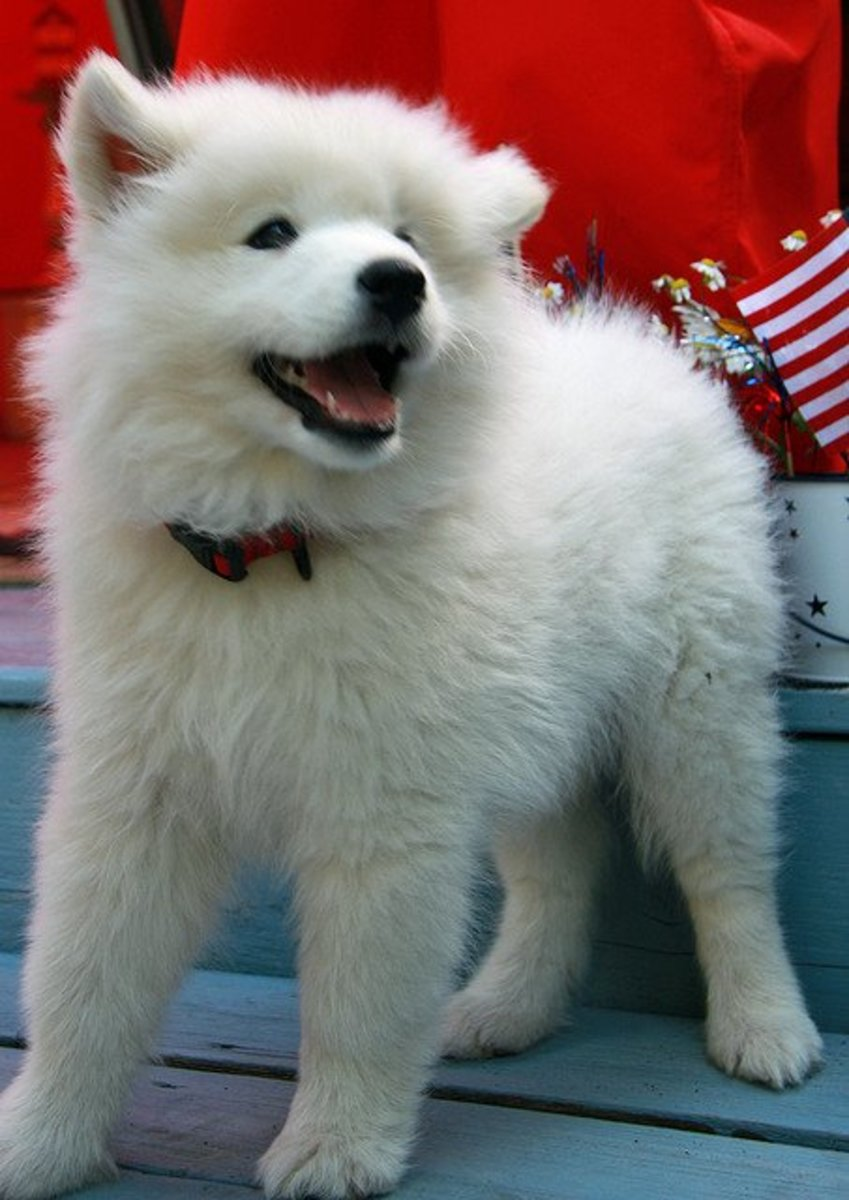 40 Best White Dog Names for a Cute Puppy