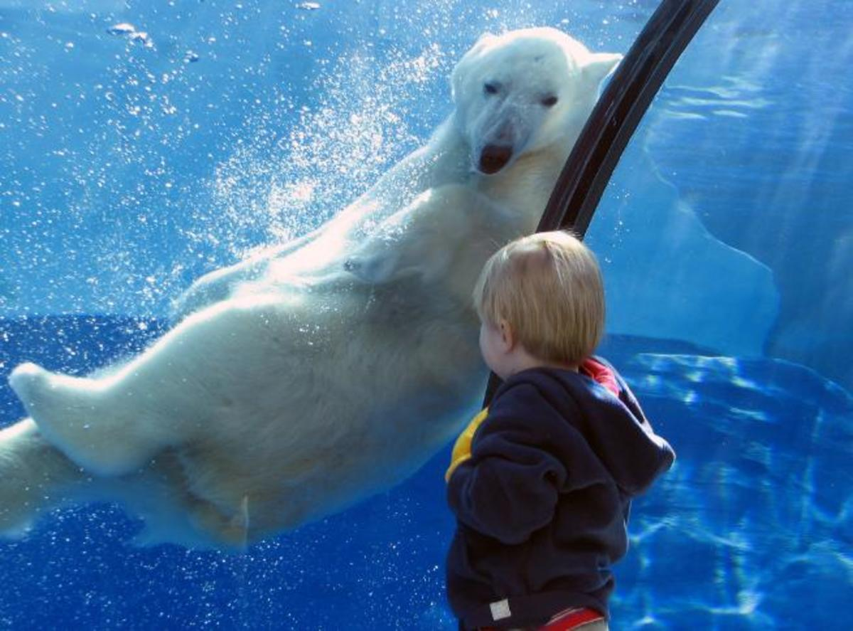 How to Make Zoo Trips Educational for Children