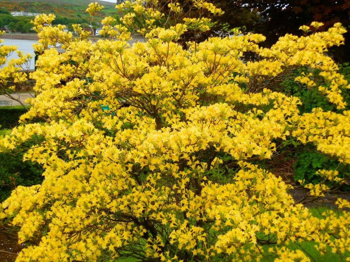 Ten Acid-Loving Plants