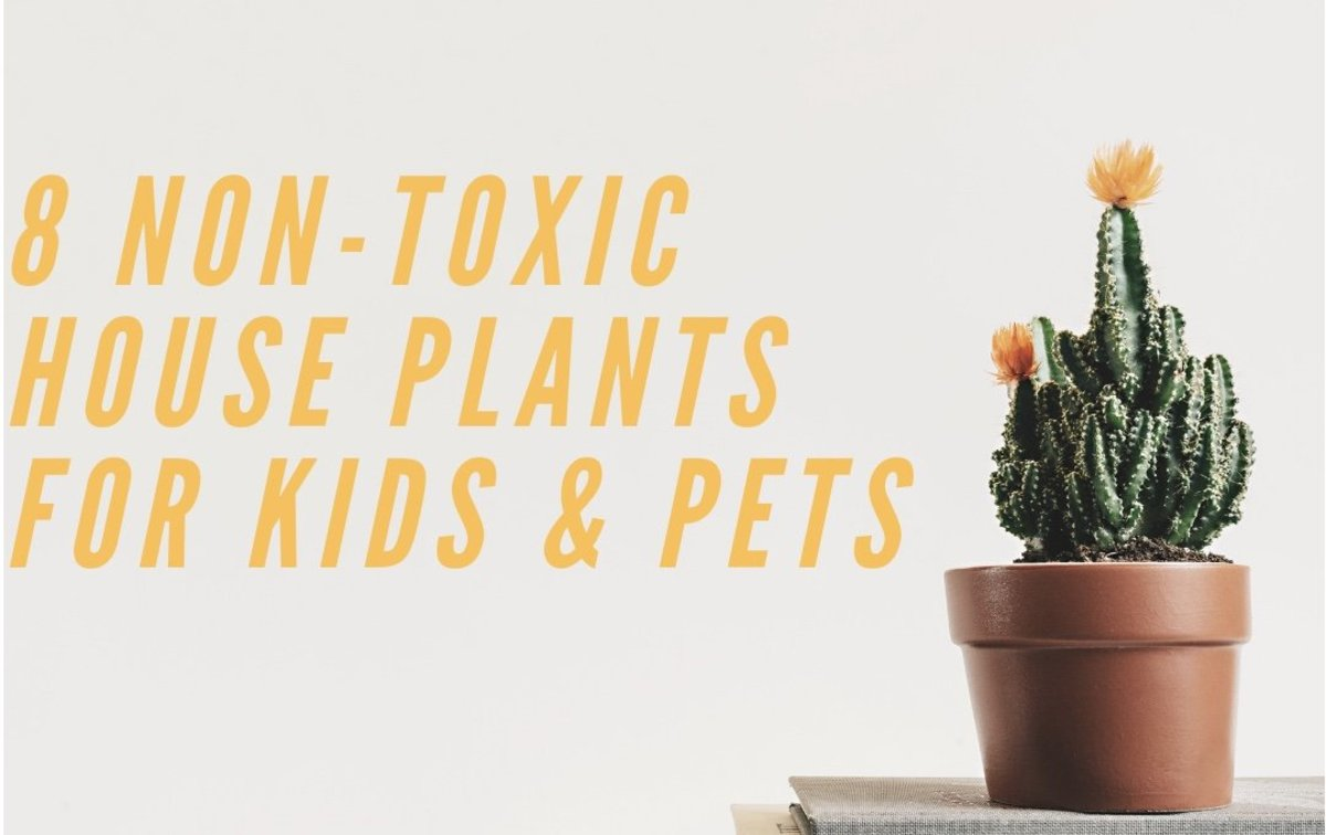 8 Non-Toxic House Plants for Children, Cats, and Dogs