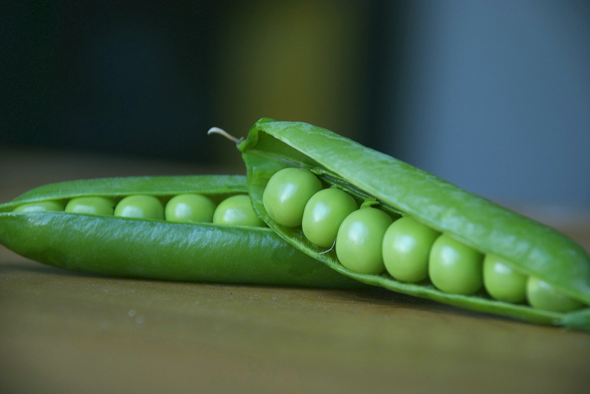 How to Grow Organic Garden Peas