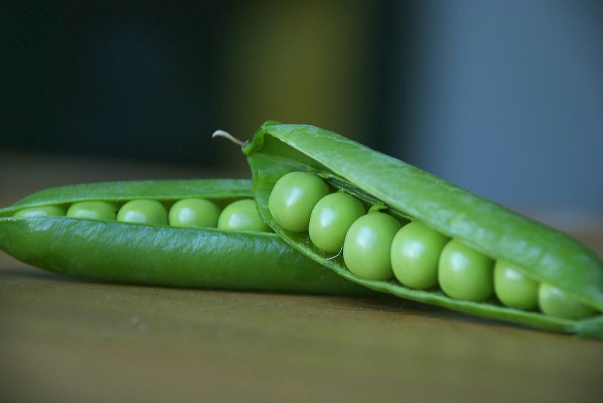 how-to-grow-organic-garden-peas