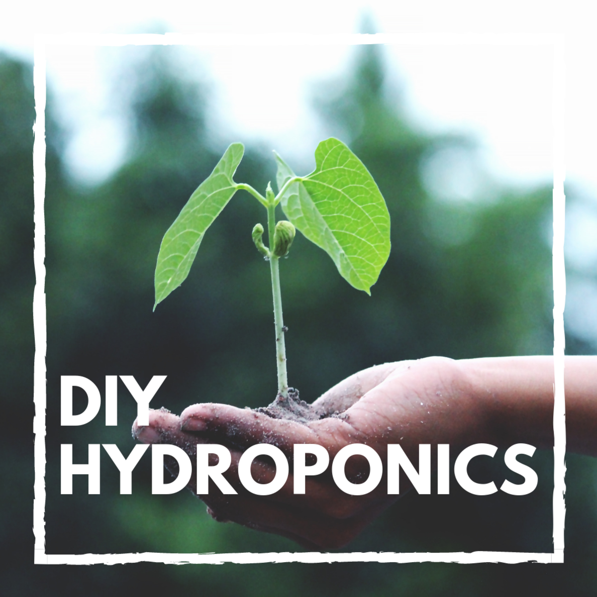 Hydroponic Tubs: A Build-It-Yourself Guide