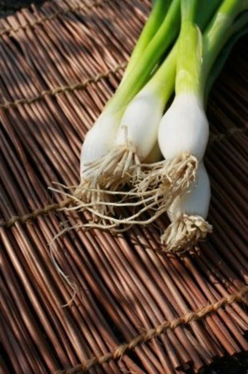 Onions, especially spring onions, are so easy to grow!