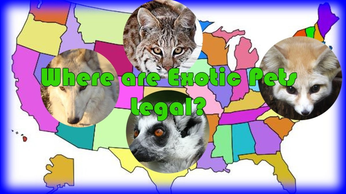 Which Exotic Pets Are Legal in the United States?