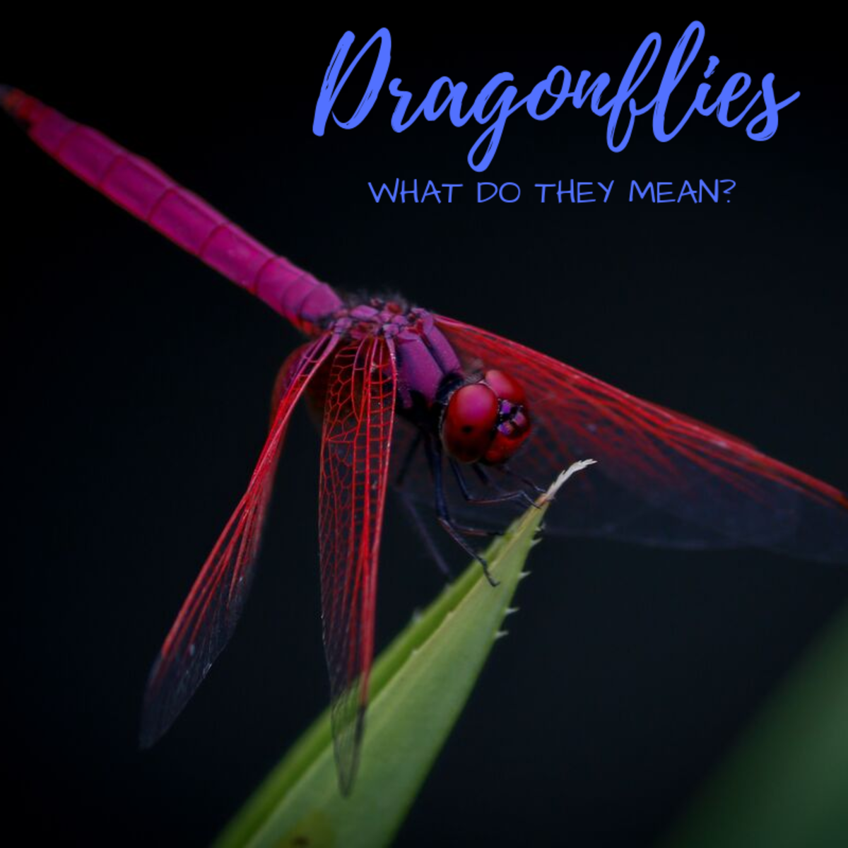 Dragonfly Facts, Symbolism, Meanings, and Photos