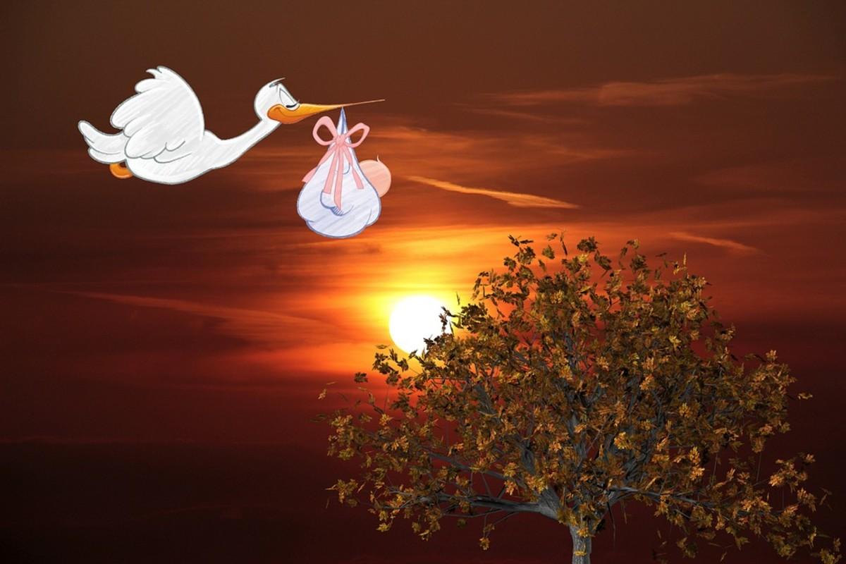 the-toronto-stork-derby