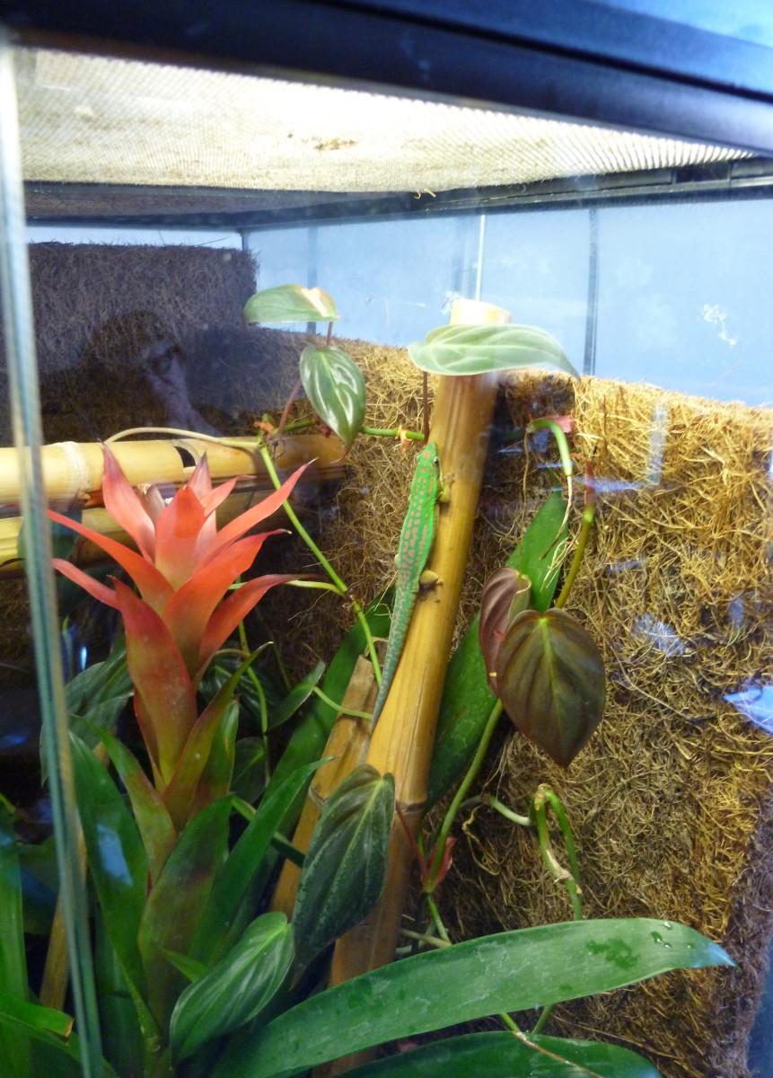 A planted natural day gecko Exo-terra terrarium