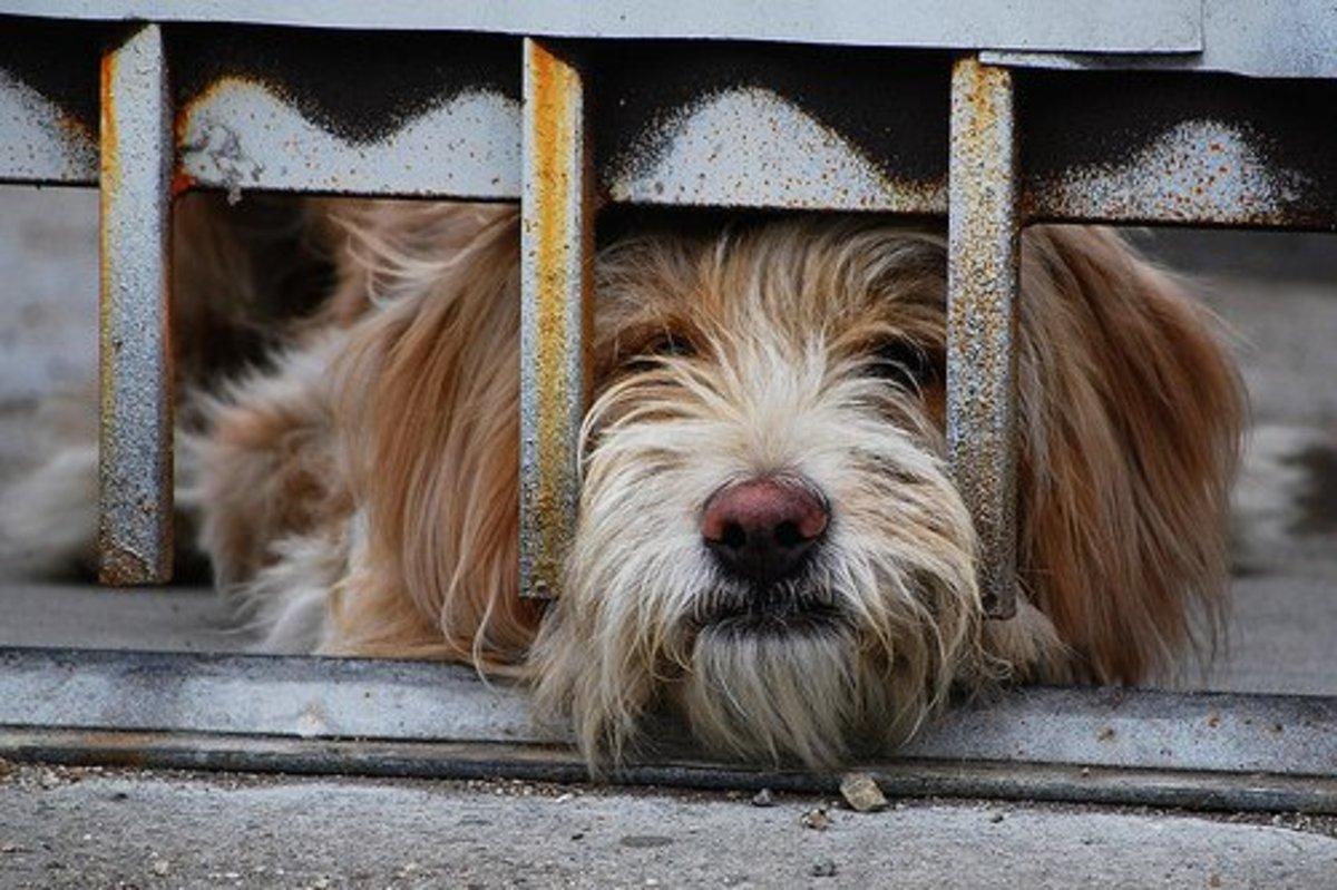 A lonely dog is a setup for destructive behaviors.