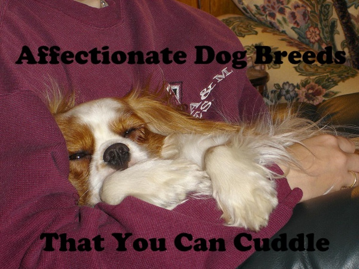 5 Affectionate Dog Breeds That You Can Cuddle