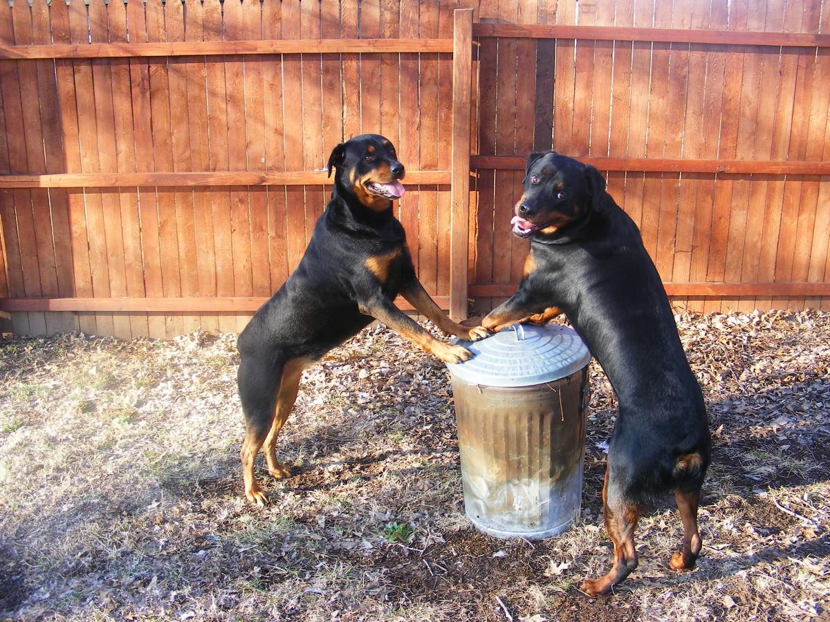 Understanding Learned Irrelevance in Dog Training