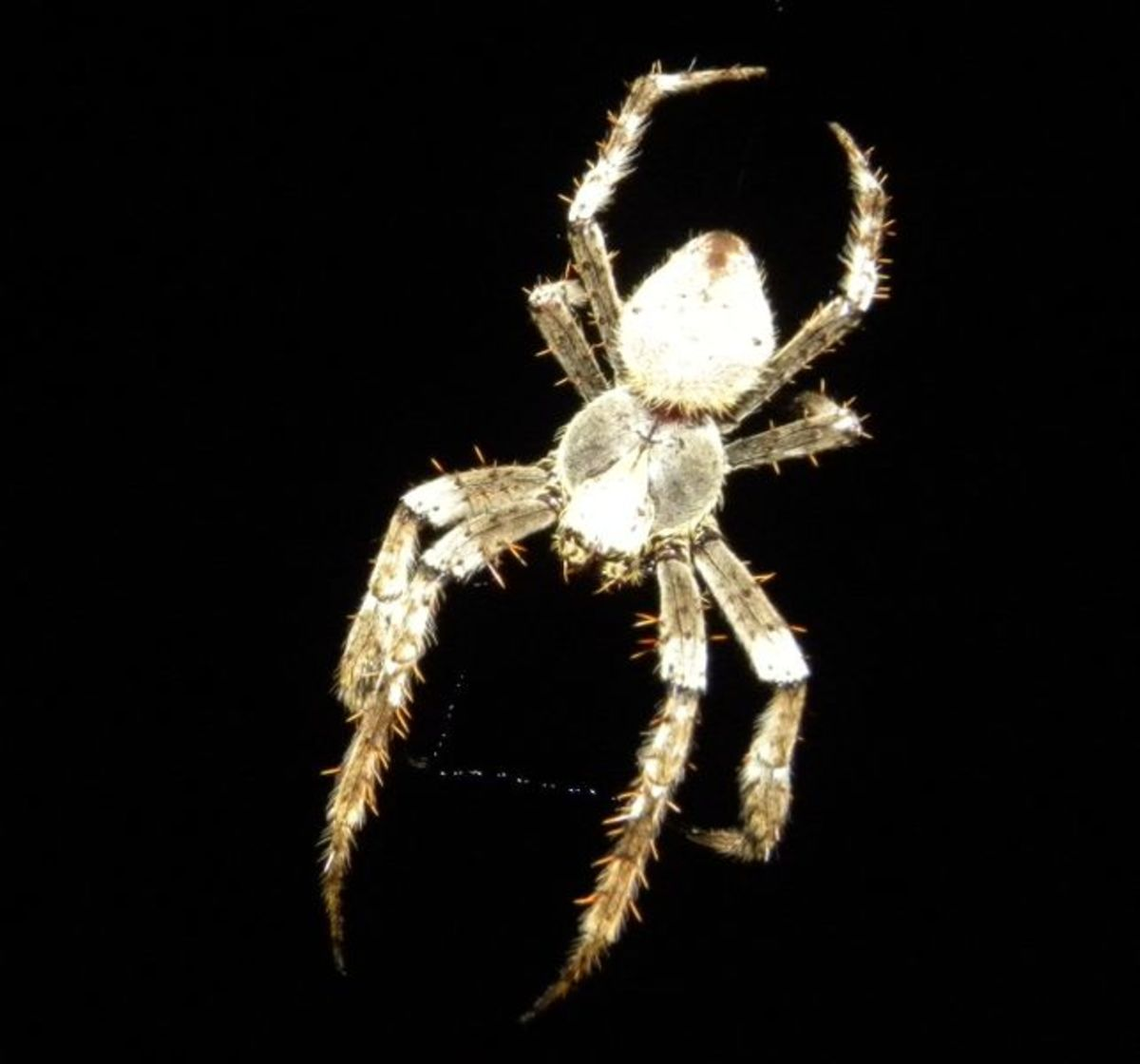 While spiders can be scary, it is best to try to remove them without harming them.