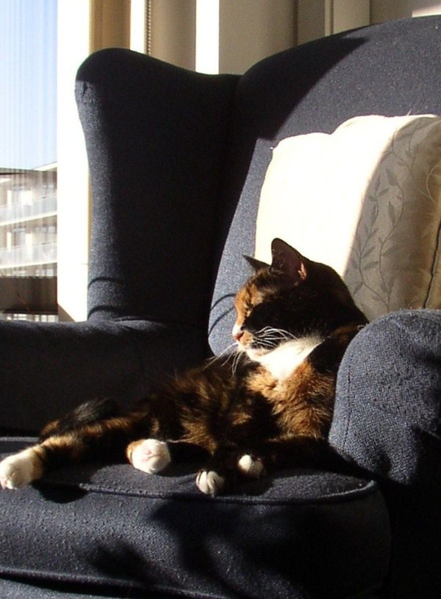 This article on pet loss and bereavement is in memory of my furry feline friend.