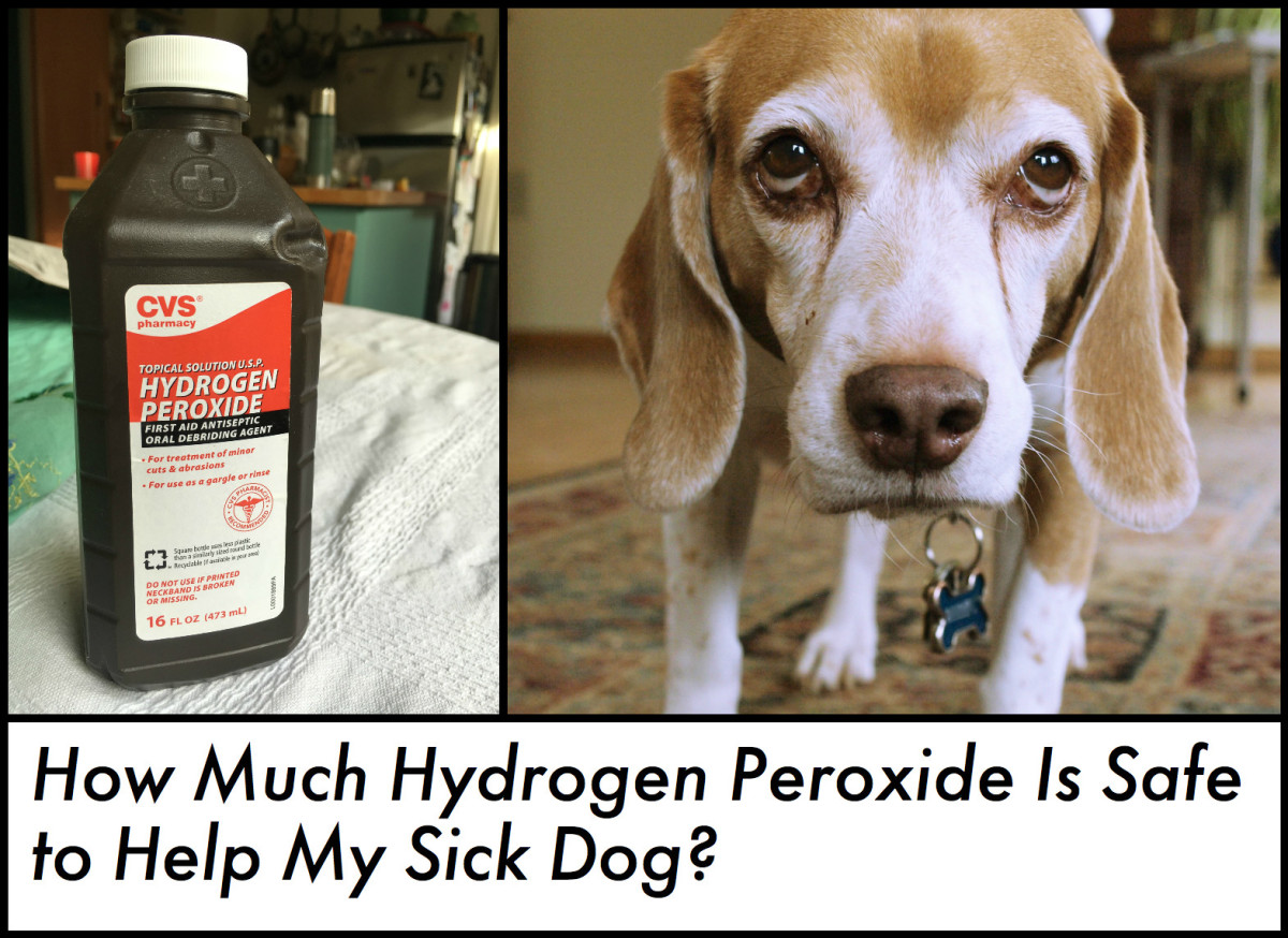 Find out how to safely administer hydrogen peroxide to a dog that needs to vomit.