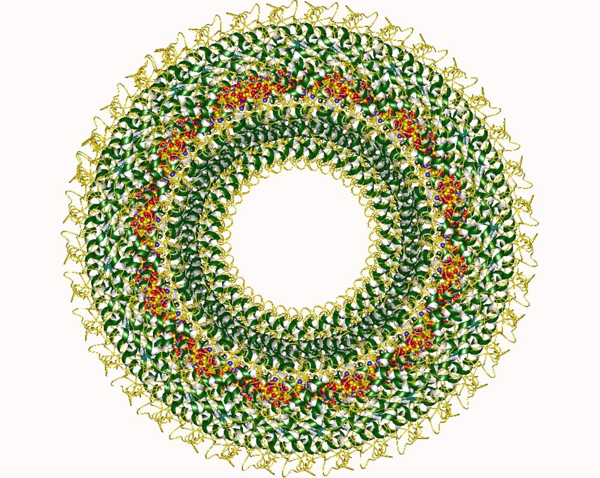 A picture of the measles virus nucleocapsid created by visualization software