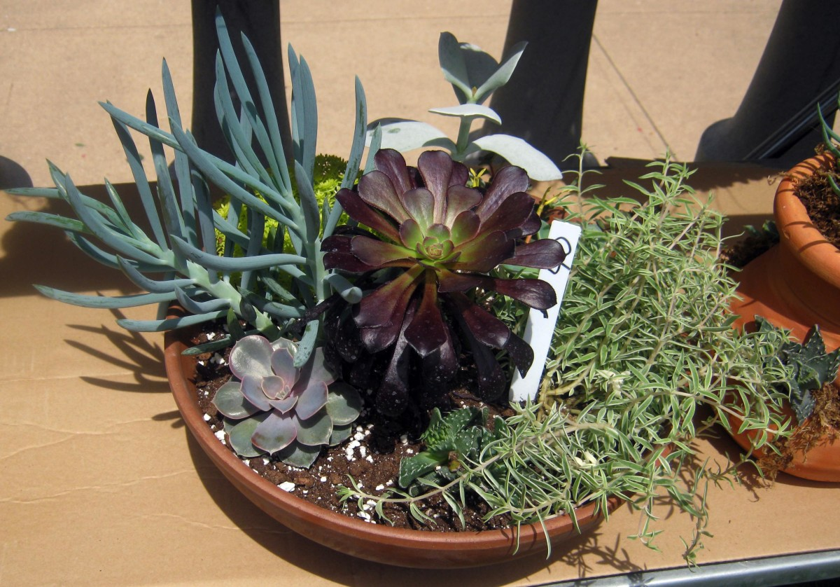 A Gallery of Succulents and How to Grow Them