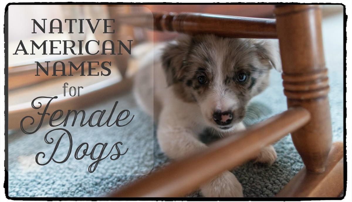 Native American Spirit Dog Names