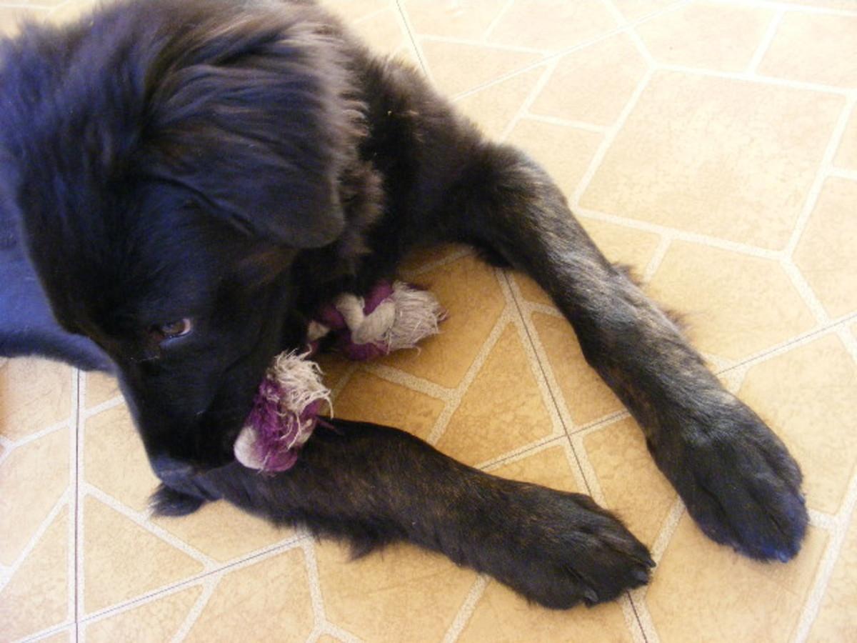 Puppy Stages: 16-Week Old Puppy Behavior and Development