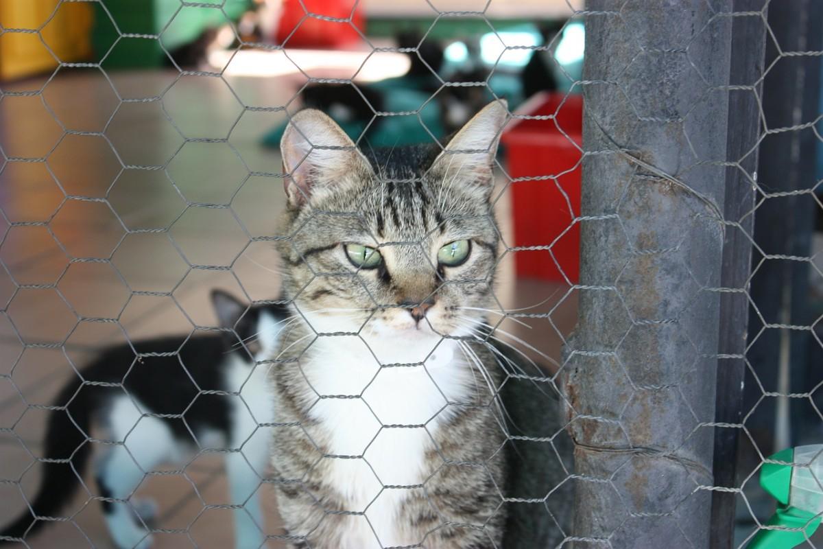 Adopting a New Pet After Your Cat or Dog Passes Away