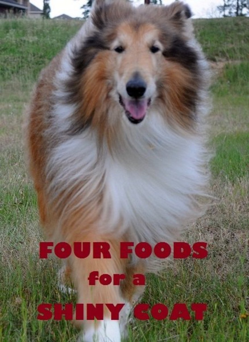 How to Give Your Dog a Shiny Coat With 4 Healthy Foods