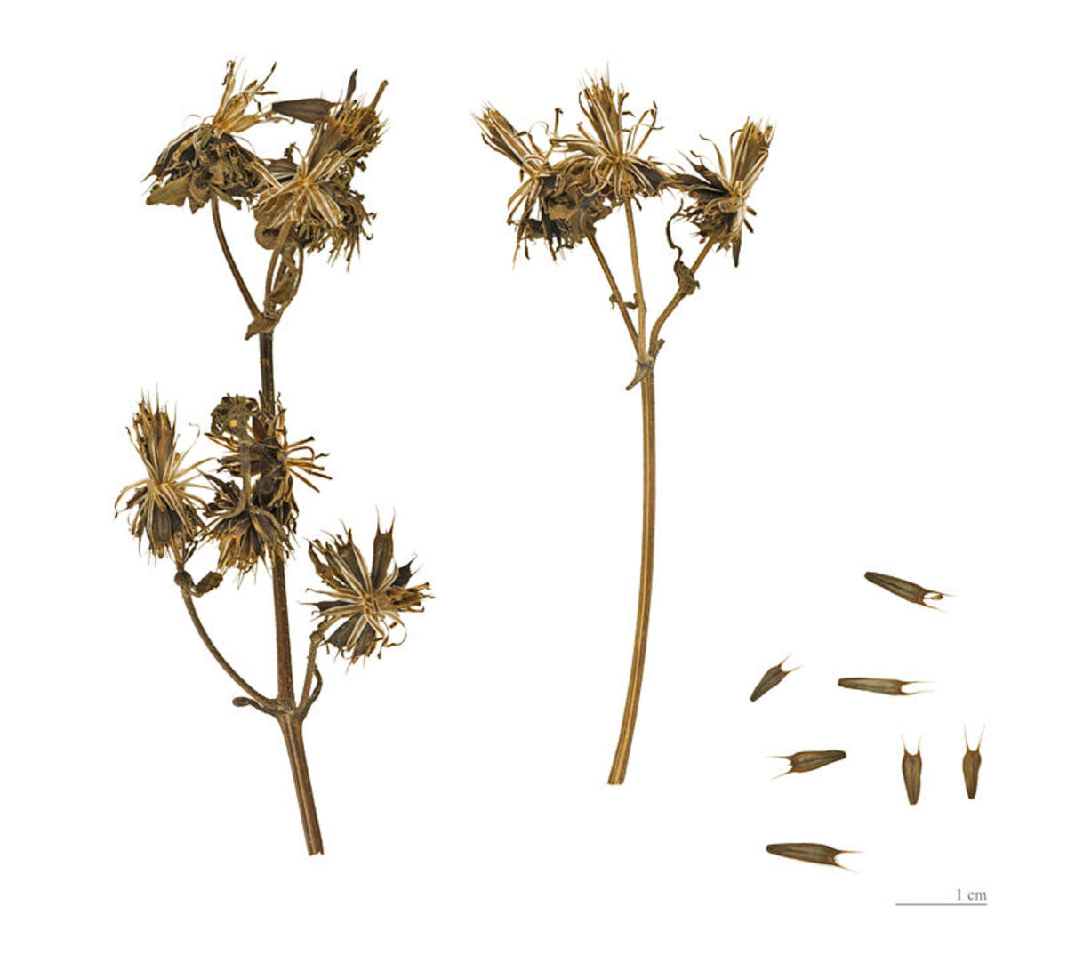 Seed Dispersal: How Do Plants Spread Their Seeds?
