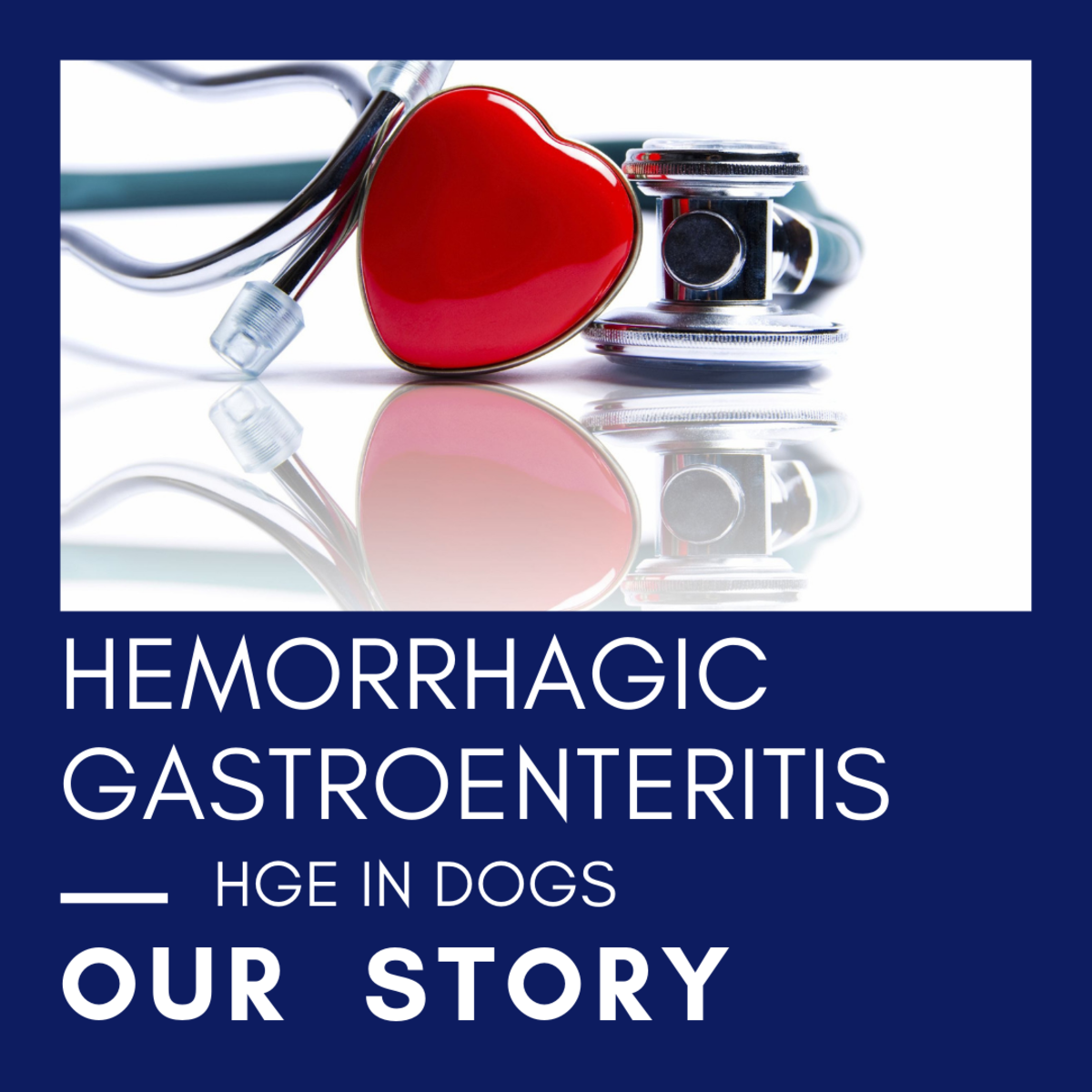 Hemorrhagic Gastroenteritis or HGE: A Dangerous Canine Intestinal Disease