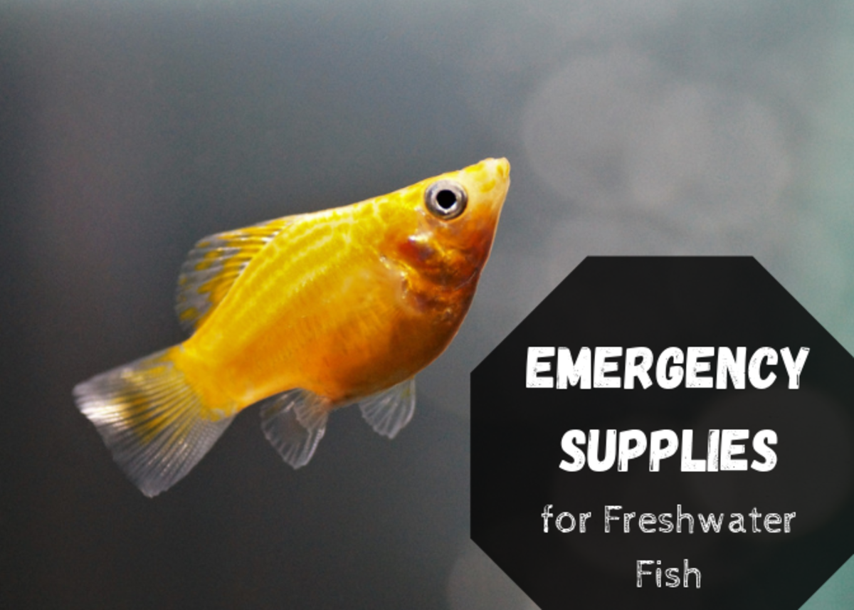 Emergency Supplies to Keep for Freshwater Fish