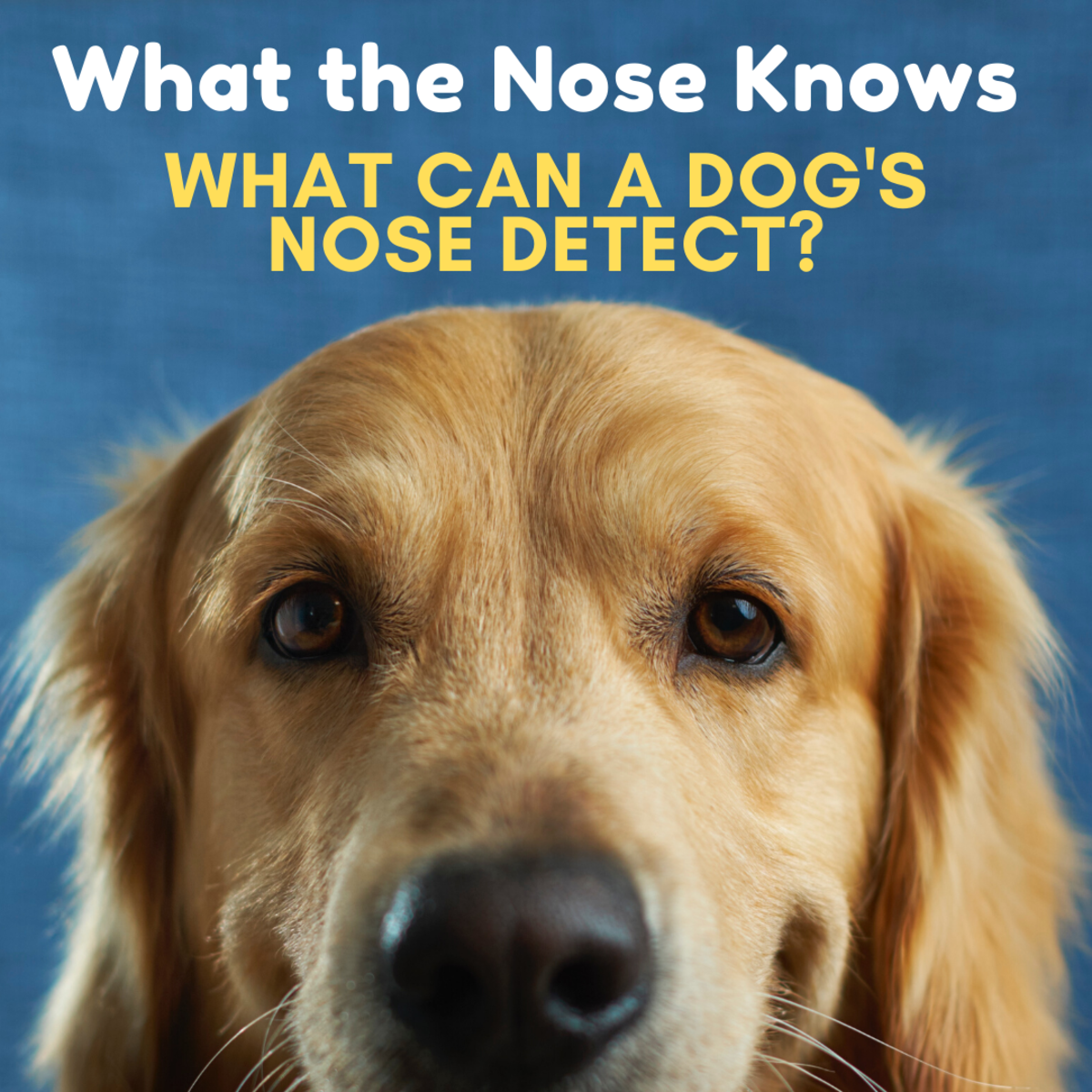 A Dog's Nose Can Detect Disease, Disaster, and Death