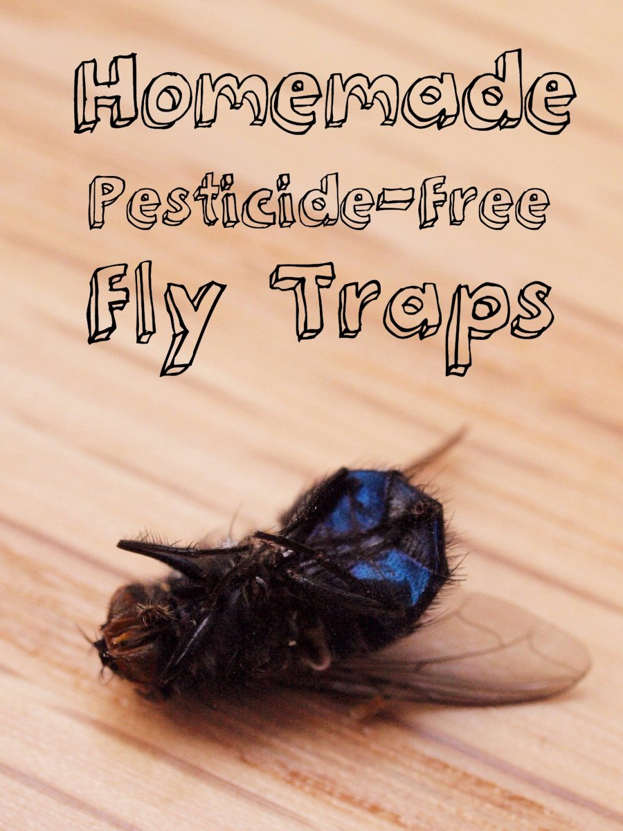3 Genius, Foolproof Fly Traps to Make at Home