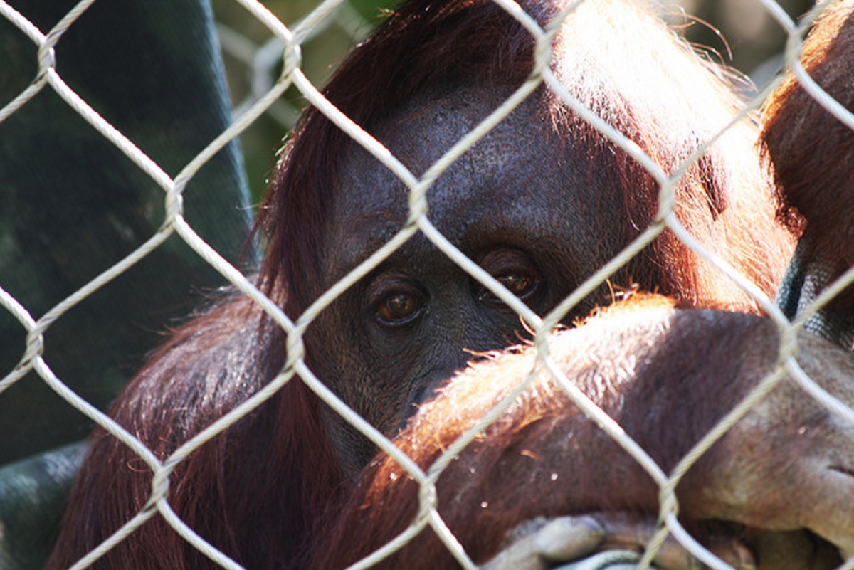 The Sad Animals in Zoos Myth