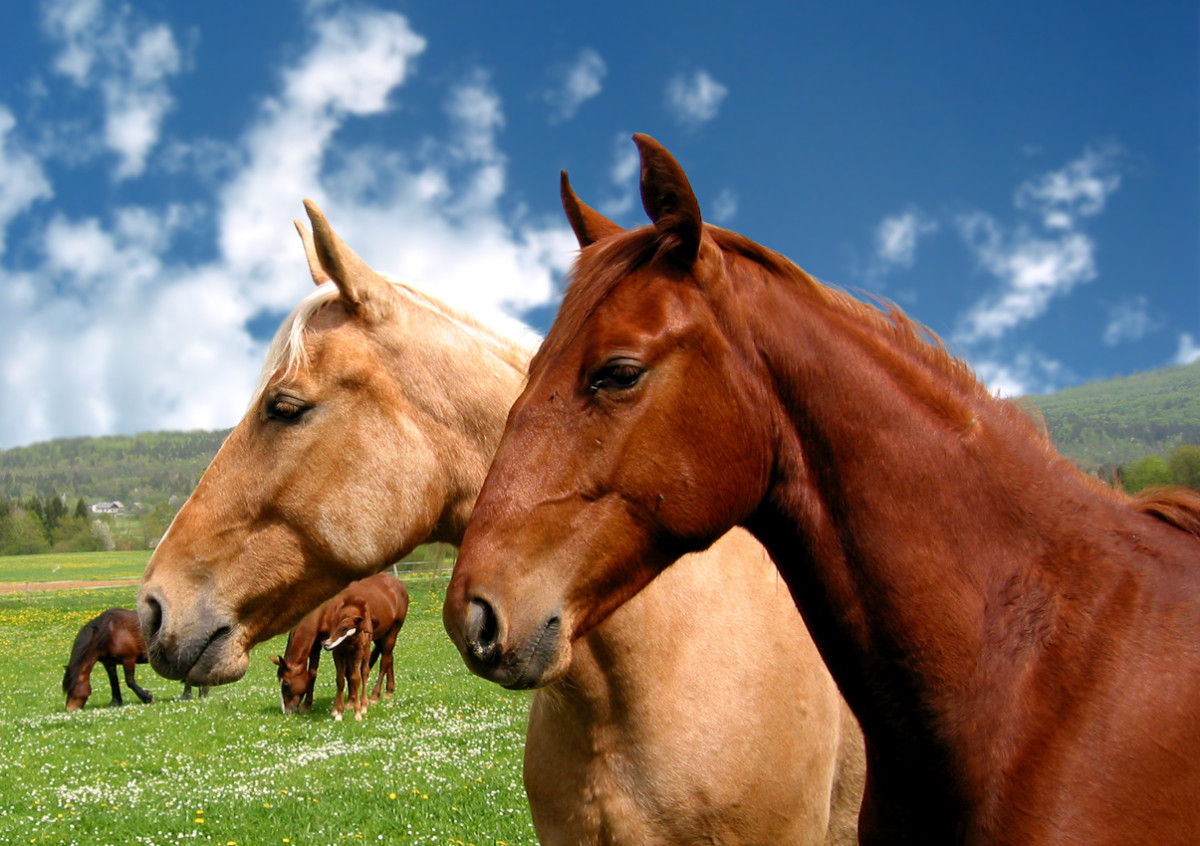 Horses are very romantic, but their idealism makes relationships hard to keep.