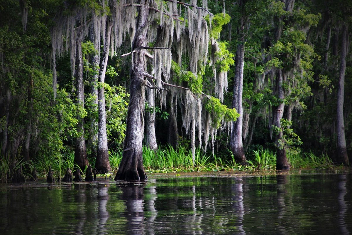 The Louisiana bayou — beautiful, but don't go in too deep. Rougarou might be in there.
