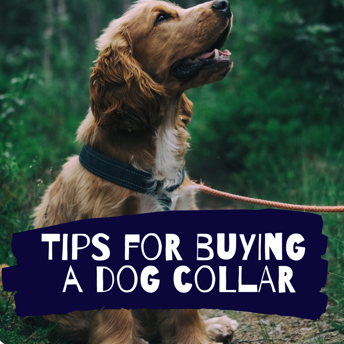 Pros and Cons of Different Types of Dog Collars