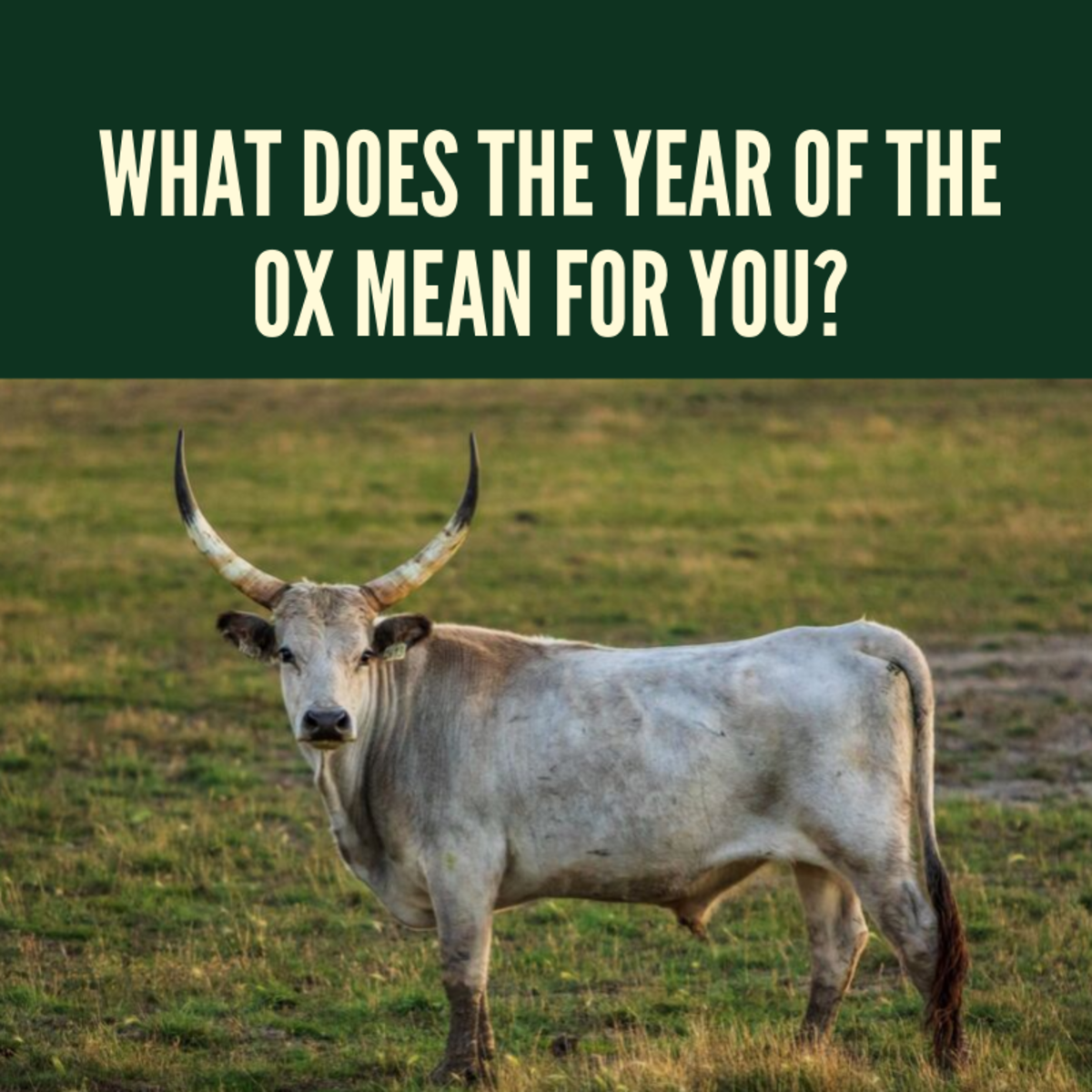 What Does the Year of the Ox Mean for You?
