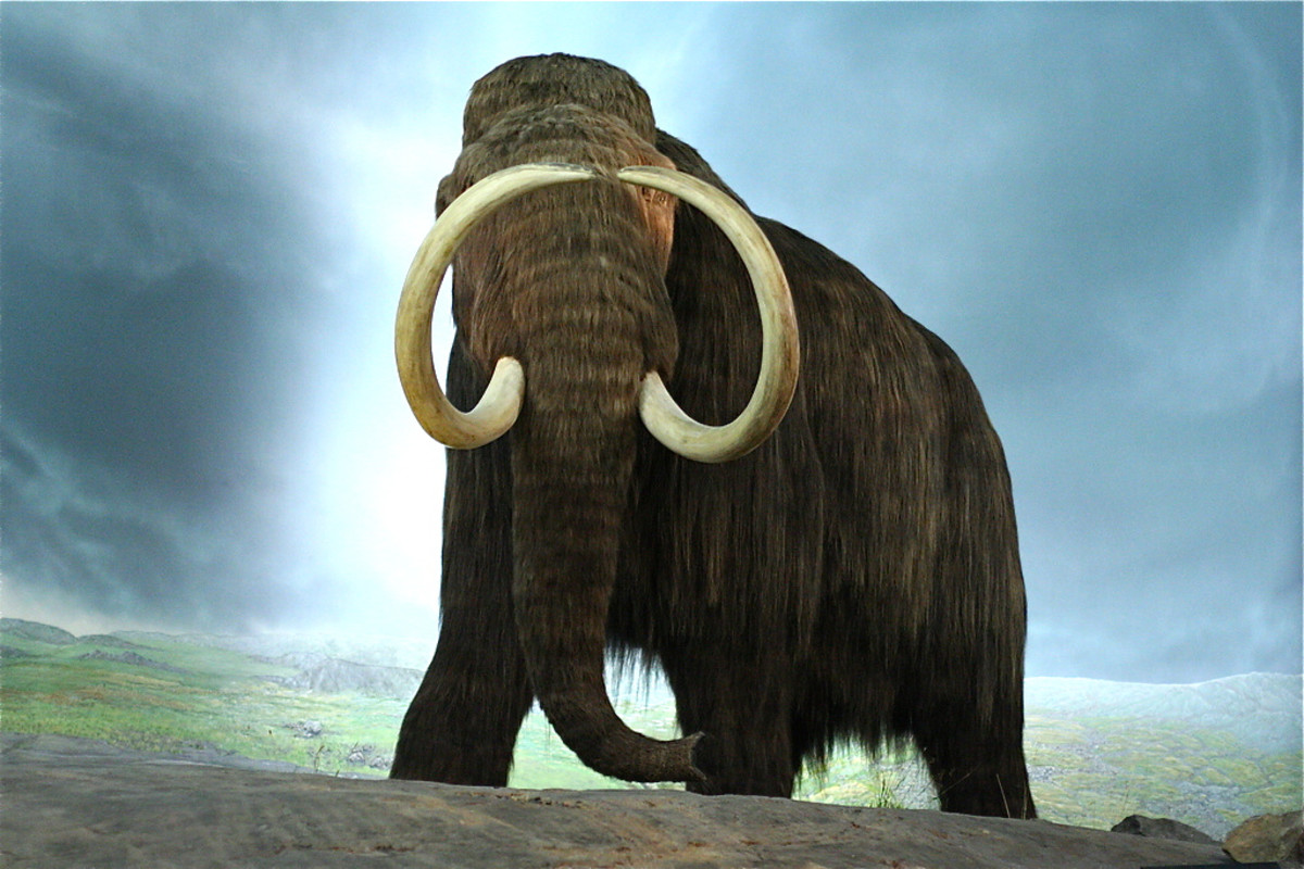 A life-size model of a mammoth at the Royal BC Museum; some people would like to bring mammoths back to life
