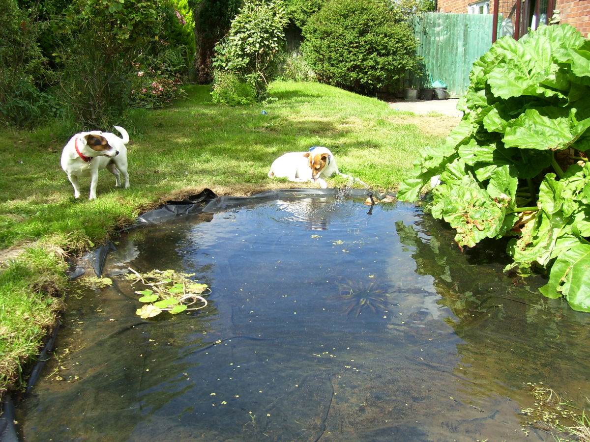 The pond is now ready for more aquatic plants.