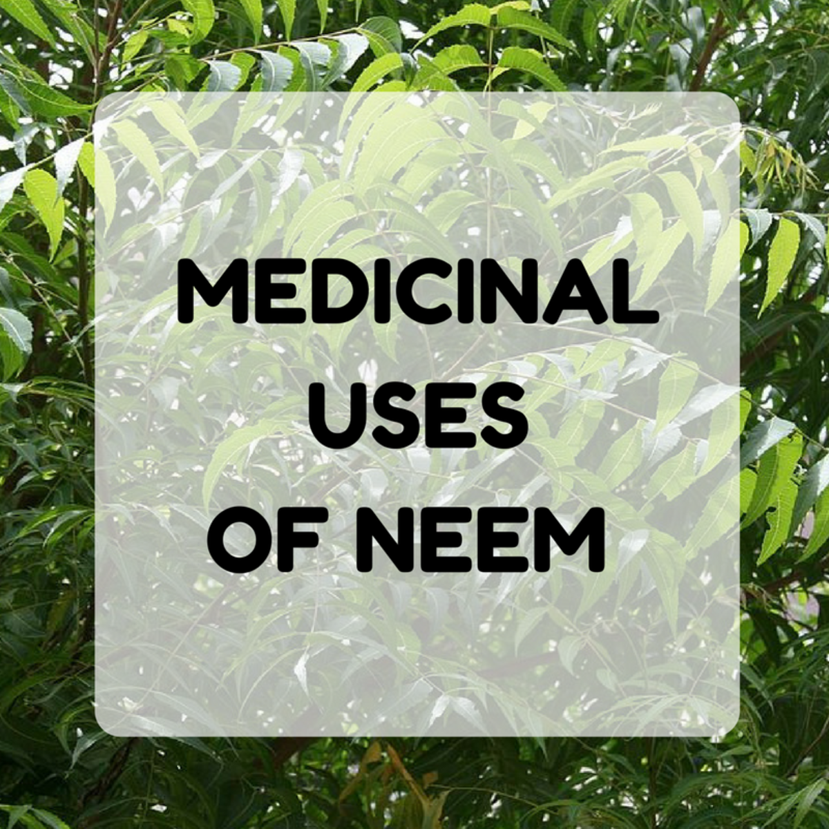 Benefits and Uses of Neem: Face Masks and Rasam Recipe