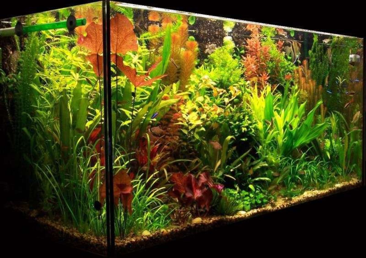 Lighting for a planted aquarium pethelpful for Plante aquarium