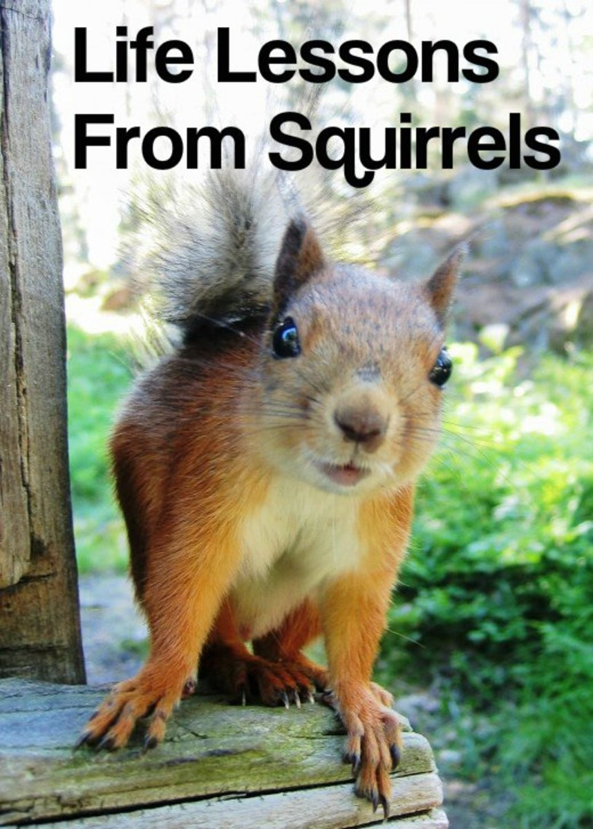 Feeling a little squirrelly lately?  Going a little nuts?  These charming backyard critters have lessons to teach us about how to live our best lives.
