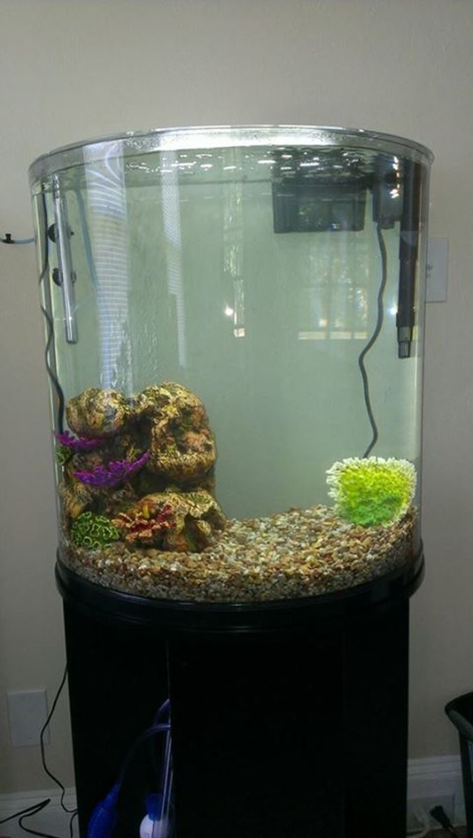 30 gallon bowed front glass aquarium with stand