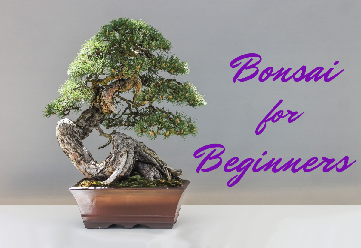 Though it definitely requires some patience and work, growing and crafting your own bonsai is more doable than you might think!