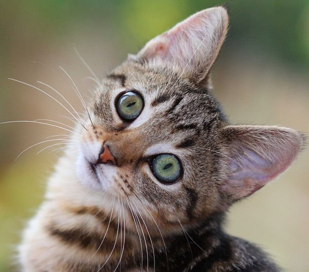 A Cat's Nose Can Find Disease, Disaster, and Death