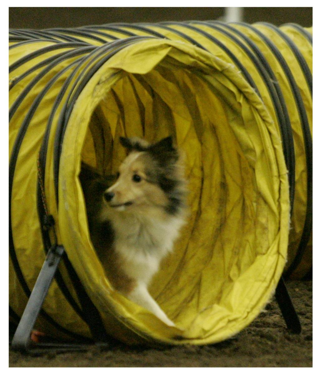Lost No More: How to Memorize a Dog Agility Course